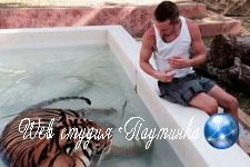 Мужчин попросили перестать кадрить девушек с помощью тигров