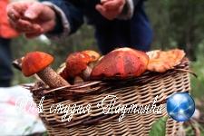 В новосибирской маршрутке обнаружили колонию опят