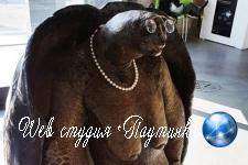 В сети отыскали родственницу Упоротого лиса в образе черепахи с отвисшей грудью