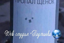 В сети разглядели Гитлера и Ежика на фото пропавшего щенка