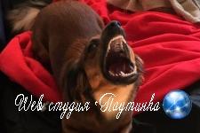 Оскал пса надоумил пользователей превратить его в Чужого и трехглавое чудовище