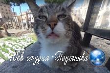 Раздраженная кошка на панораме Google вызвала ажиотаж в сети