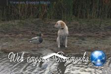 Встреча пса и пластиковой утки угодила на карты Google